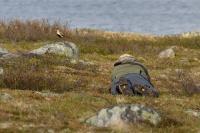 Hardangervidda (Norsko) 0428